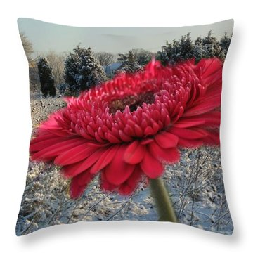 Gerbera Daisy In The Snow Throw Pillow
