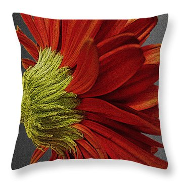 Gerbera In Red Throw Pillow by Megan Washington