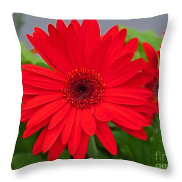 Gerbera Love Throw Pillow