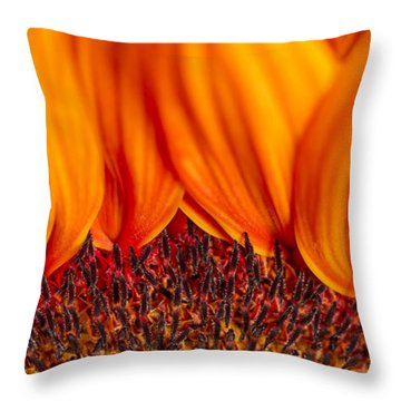 Throw Pillow featuring the photograph Gerbera On Fire by Adam Romanowicz