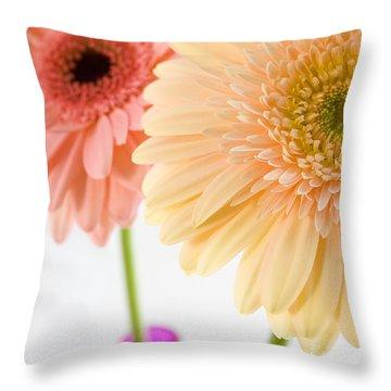 Peach And Pink Gerbera Throw Pillow