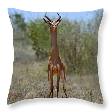 Gerenuk Throw Pillow by Tony Beck