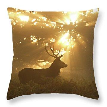 Stag Throw Pillows