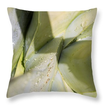 Giant Agave Abstract 3 Throw Pillow