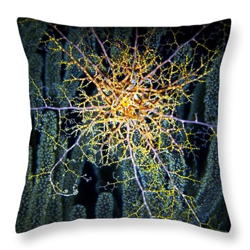 Giant Basket Star At Night Throw Pillow by Amy McDaniel