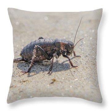 Throw Pillow featuring the photograph Giant Bradyporid Bushcricket - Bradyporus Dasypus by Jivko Nakev