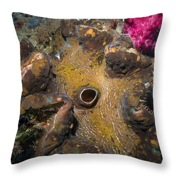 Throw Pillow featuring the photograph Giant Clam by Aaron Whittemore