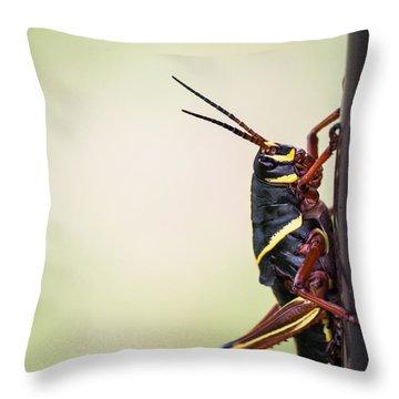 Giant Eastern Lubber Grasshopper Throw Pillow by Edward Fielding