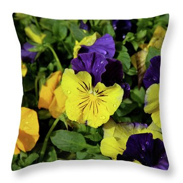 Giant Garden Pansies Throw Pillow by Ed  Riche