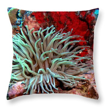 Giant Green Sea Anemone Against Red Coral Throw Pillow by Amy McDaniel