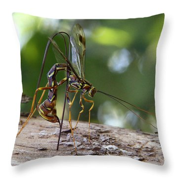 Giant Ichneumon Wasp Throw Pillow