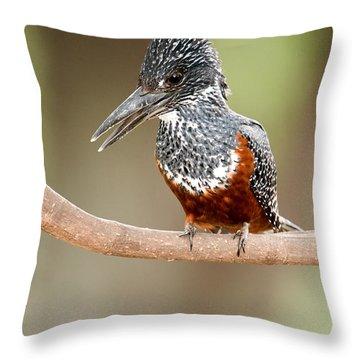Giant Kingfisher Megaceryle Maxima Throw Pillow