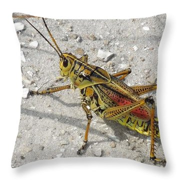 Throw Pillow featuring the photograph Giant Orange Grasshopper by Ron Davidson