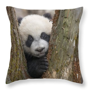 Throw Pillow featuring the photograph Giant Panda Cub Bifengxia Panda Base by Katherine Feng
