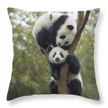 Giant Panda Cubs Playing Chengdu Throw Pillow