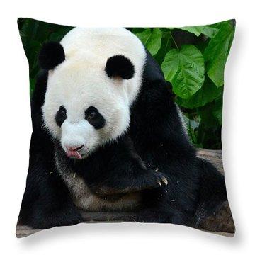 Giant Panda With Tongue Touching Nose At River Safari Zoo Singapore Throw Pillow