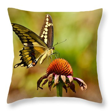 Giant Swallowtail Butterfly Throw Pillow by Kathy Baccari