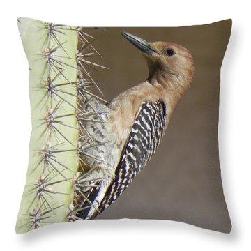 Throw Pillow featuring the photograph Gila Woodpecker by Deb Halloran