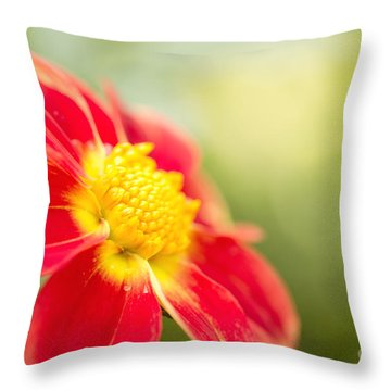 Ginger Throw Pillow by Beve Brown-Clark Photography