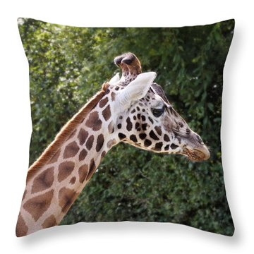Giraffe 01 Throw Pillow