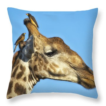 Giraffe And Oxpeckers Throw Pillow