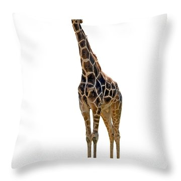 Throw Pillow featuring the photograph Giraffe by Charles Beeler