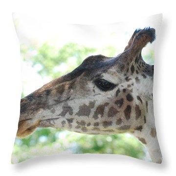 Giraffe Chewing On A Tree Branch Throw Pillow by DejaVu Designs