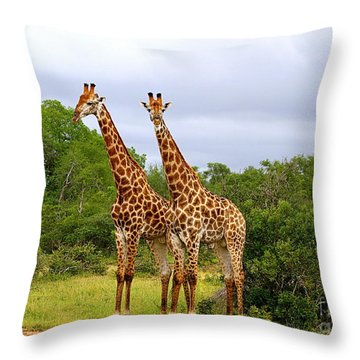 Giraffe Males Before The Storm Throw Pillow
