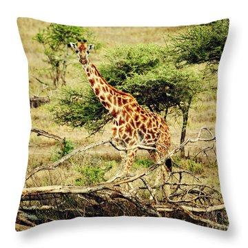 Giraffe On African Savanna Throw Pillow by Michal Bednarek