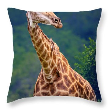 Giraffe Portrait Closeup Throw Pillow