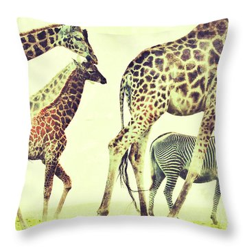 Throw Pillow featuring the photograph Giraffes And A Zebra In The Mist by Nick  Biemans