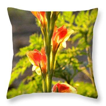 Gladiolus Sun Throw Pillow
