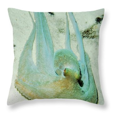 Throw Pillow featuring the photograph Gliding Reef Octopus by Amy McDaniel