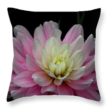 Glistening Dahlia Radiance Throw Pillow