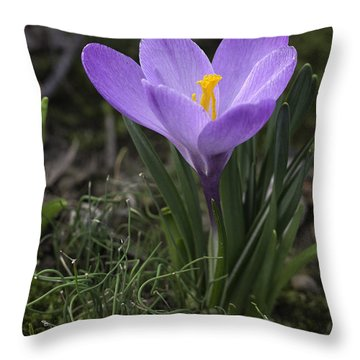 Throw Pillow featuring the photograph Glorious Crocus by Betty Denise