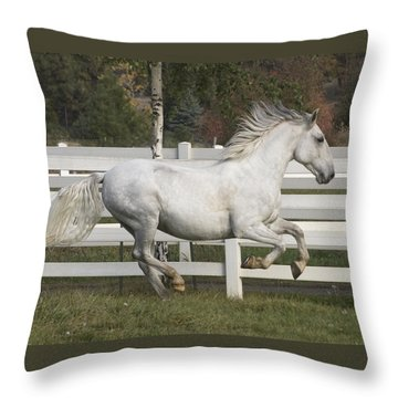 Throw Pillow featuring the photograph Glorious Gunther D2972 by Wes and Dotty Weber