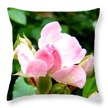 Glorious Rosebud Throw Pillow by Leea Baltes
