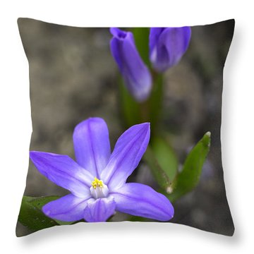 Throw Pillow featuring the photograph Glory Of The Snow by Betty Denise