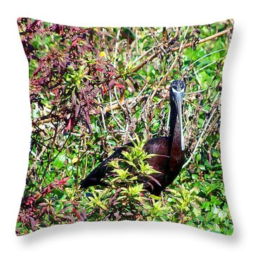 Throw Pillow featuring the photograph Glossy Ibis 000 by Chris Mercer