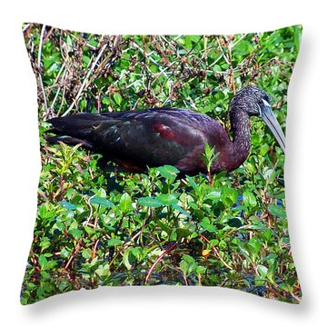 Throw Pillow featuring the photograph Glossy Ibis 001 by Chris Mercer