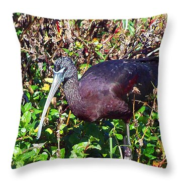 Throw Pillow featuring the photograph Glossy Ibis  by Chris Mercer