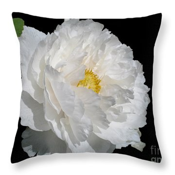 Throw Pillow featuring the photograph Glow by Arlene Carmel