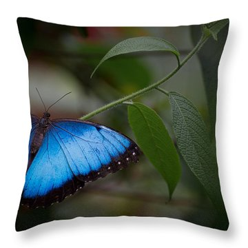 Glowing Blue Throw Pillow by Penny Lisowski