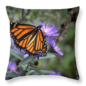 Throw Pillow featuring the photograph Glowing Butterfly by Nava Thompson