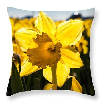 Glowing Daffodil Throw Pillow