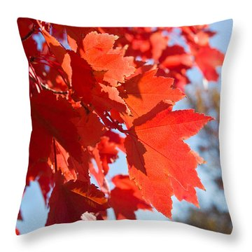 Glowing Fall Maple Colors 4 Throw Pillow