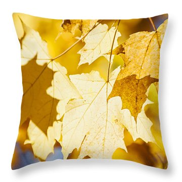 Glowing Fall Maple Leaves Throw Pillow by Elena Elisseeva