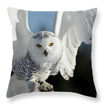 Glowing Snowy Owl In Flight Throw Pillow by Inspired Nature Photography Fine Art Photography