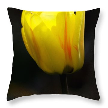 Glowing Tulip Throw Pillow by Shelly Gunderson