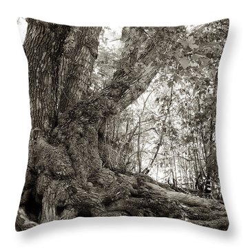 Gnarled Tree Throw Pillow